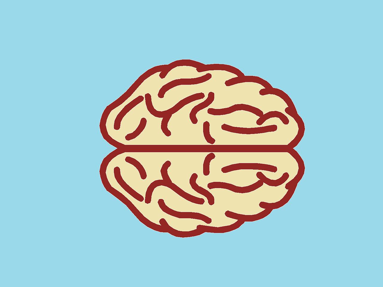 cambios en el cerebro al aprender inglés